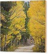 Colorado Rocky Mountain Aspen Road Portrait  Wood Print