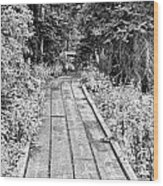 Colorado Rocky Mountain Forest Path Bw Wood Print