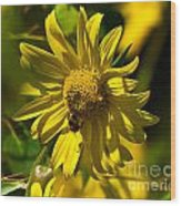 Colorado Sunflower And Visitor Wood Print