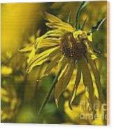 Colorado Sunflowers Wood Print