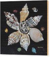 Colored Seashells Wood Print