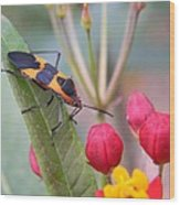 Colorful Aphid Wood Print
