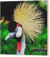 Colorful Bird Wood Print