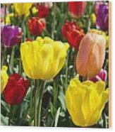 Colorful Bright Tulip Flowers Field Tulips Floral Art Prints Wood Print