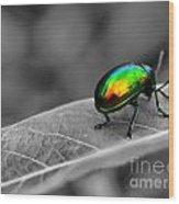 Colorful Bug Wood Print