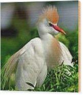 Colorful Cattle Egret Wood Print