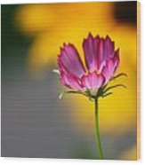 Colorful Cosmos And Black Eyed Susan Background Wood Print