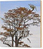 Colorful Cypress Wood Print