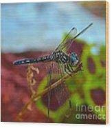 Colorful Dragon Fly Wood Print
