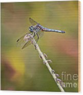 Colorful Dragonfly Dream Wood Print