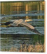 Colorful Evening Flight Wood Print