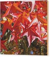 Colorful Fall Tree Red Leaves Art Prints Wood Print
