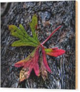 Colorful Fallen Leaf Wood Print