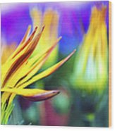 Colorful Flowers Wood Print