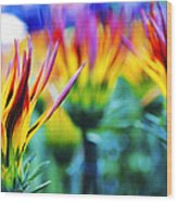 Colorful Flowers Together Wood Print