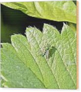 Colorful Garden Fly 2 Wood Print