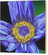 Colorful Lily Wood Print