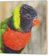 Colorful Lorikeet Parrot Wood Print