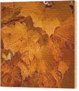 Colorful Maple Leaves In Fall Wood Print