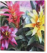 Colorful Mixed Bromeliads Wood Print