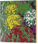 Colorful Mums Photo Art Wood Print