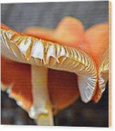 Colorful Mushrooms Wood Print
