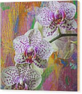 Colorful Orchids Wood Print