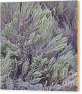 Colorful Sagebrush Wood Print