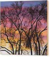 Colorful Silhouetted Trees 26 Wood Print