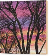 Colorful Silhouetted Trees 33 Wood Print
