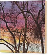 Colorful Silhouetted Trees 37 Wood Print