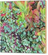 Colorful Succulent Plants For You Wood Print