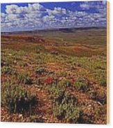 Colorful Valley From Fossil Lake Trailsil Bu Wood Print