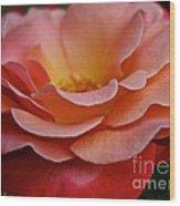 Colorific Wood Print