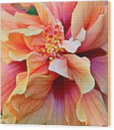 Coloring Book Hibiscus Wood Print