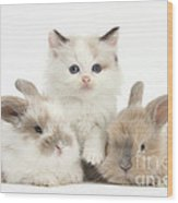 Colorpoint Kitten With Baby Rabbits Wood Print