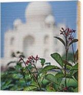 Colors Around The Taj Mahal Wood Print