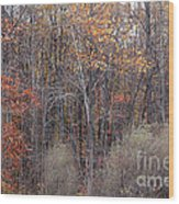 Colors Galore Wood Print