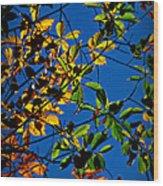 Colors Of The Autumn Elm Wood Print