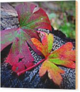 Colors Of The Autumn Forest Wood Print
