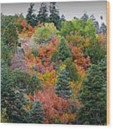 Colors Of The Sandia Forest Wood Print