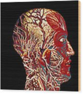 Colour Artwork Of Nerve & Blood Supply Of Head Wood Print