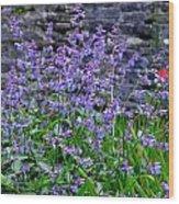 Colour Purple Wood Print