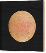 Coloured Sem Of A Fertilized Human Egg (zygote) Wood Print