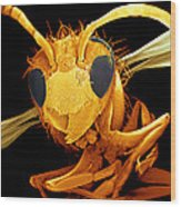 Coloured Sem Of A Wasp (vespa Sp.) In Flight Wood Print