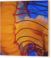 Colours Of The Jelly Fish 3 Wood Print