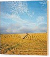 Combine Harvesting A Wheat Field Wood Print