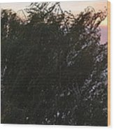 Comet Sun Wood Print