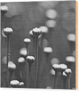 Coming Up Daisies Abstract In Black And White Wood Print