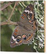 Common Buckeye Butterfly Din182 Wood Print